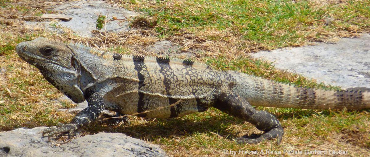 tiere-ausflugsziele-reptilien-zoo-freizeitangebote-tierpark